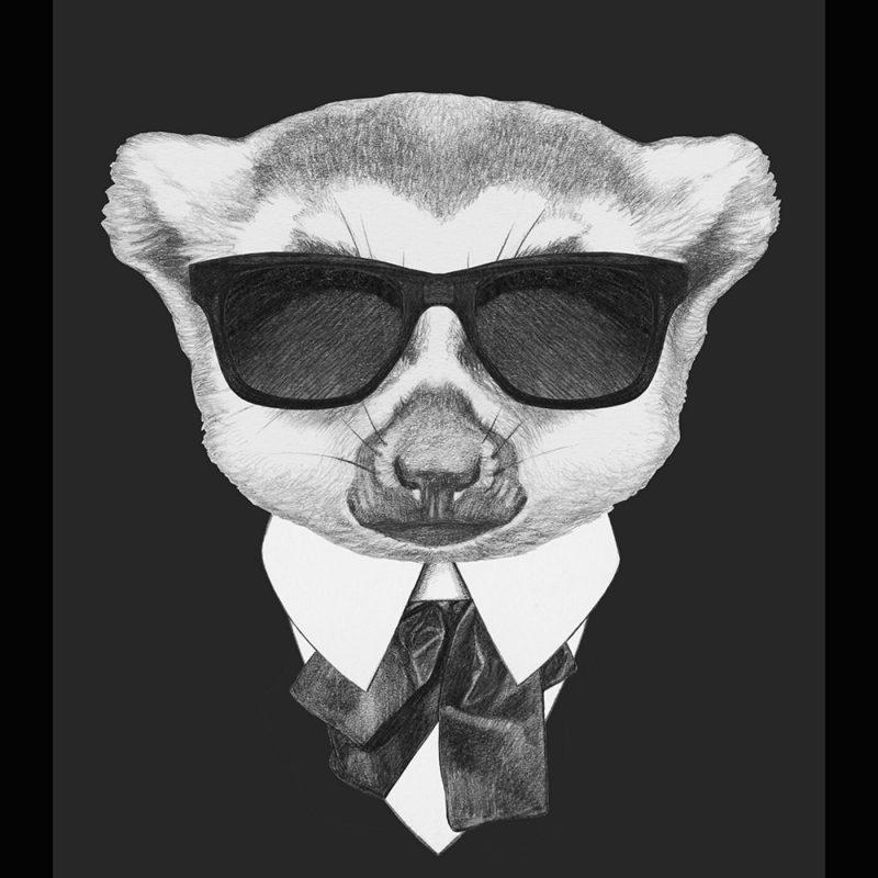 A Conspiracy of Lemurs